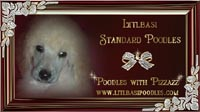 Little Basi Standard Poodle kennels